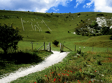 Friends of the South Downs conservation